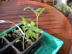 Pflanzen auseinander pflanzen