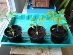 Die Pflanzen erholen sich schnell